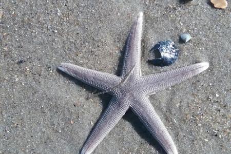 Starfish on Carova Beach