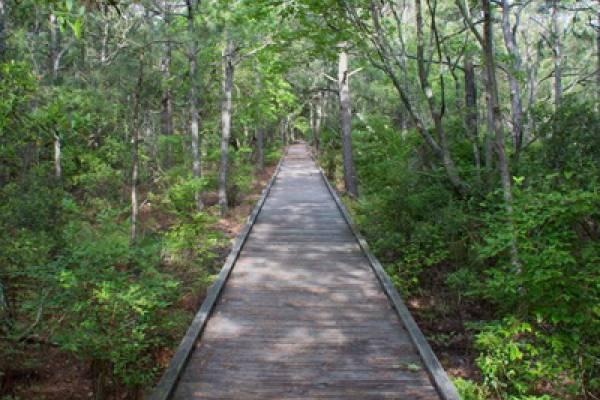 Currituck Banks Coastal Estuarine Reserve