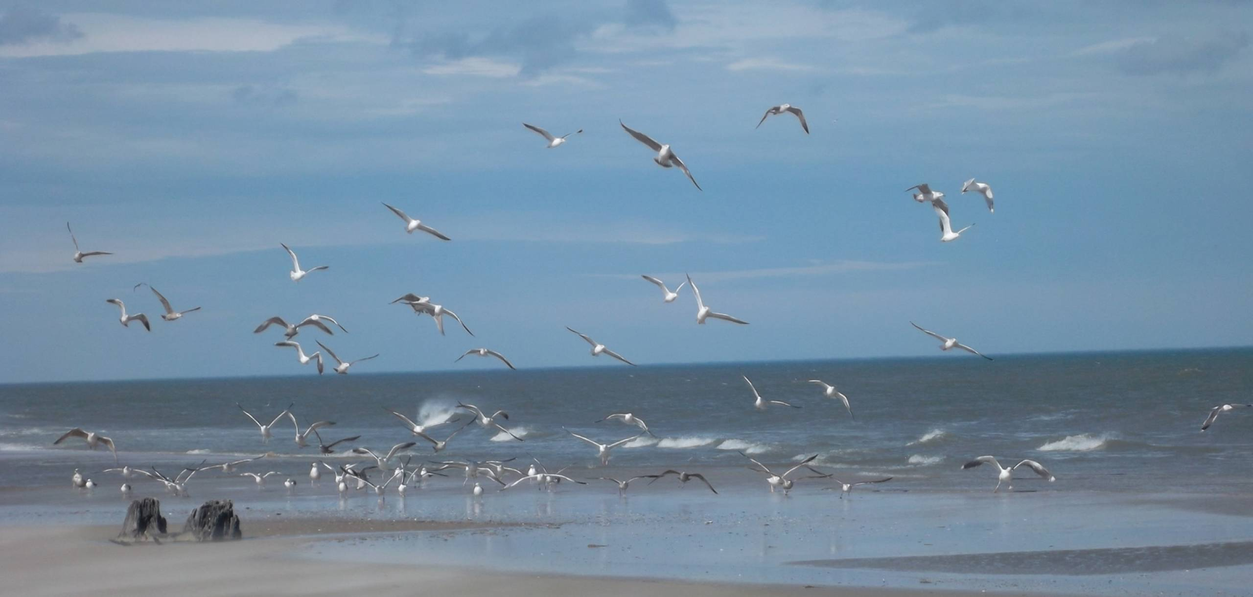Birds on Carova Beach