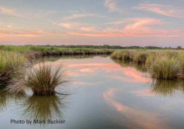Pine Island Audubon Sanctuary - photo by Mark Buckler