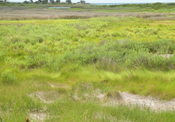 Brackish Marsh - photo by Bob Glennon, US Fish & Wildlife Service