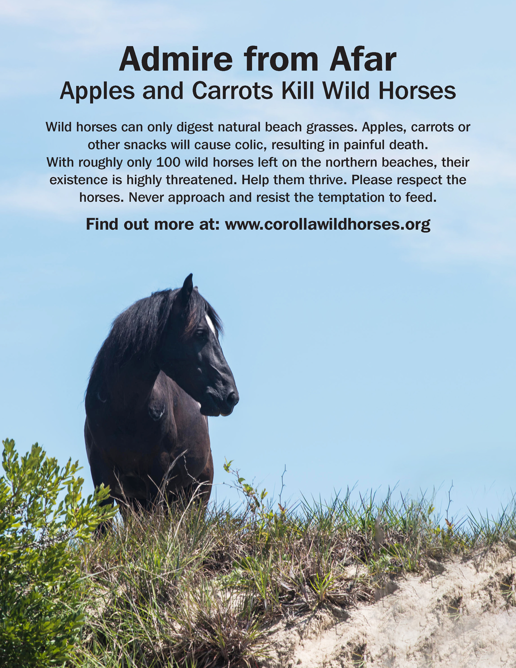 Admire Wild Horses from afar