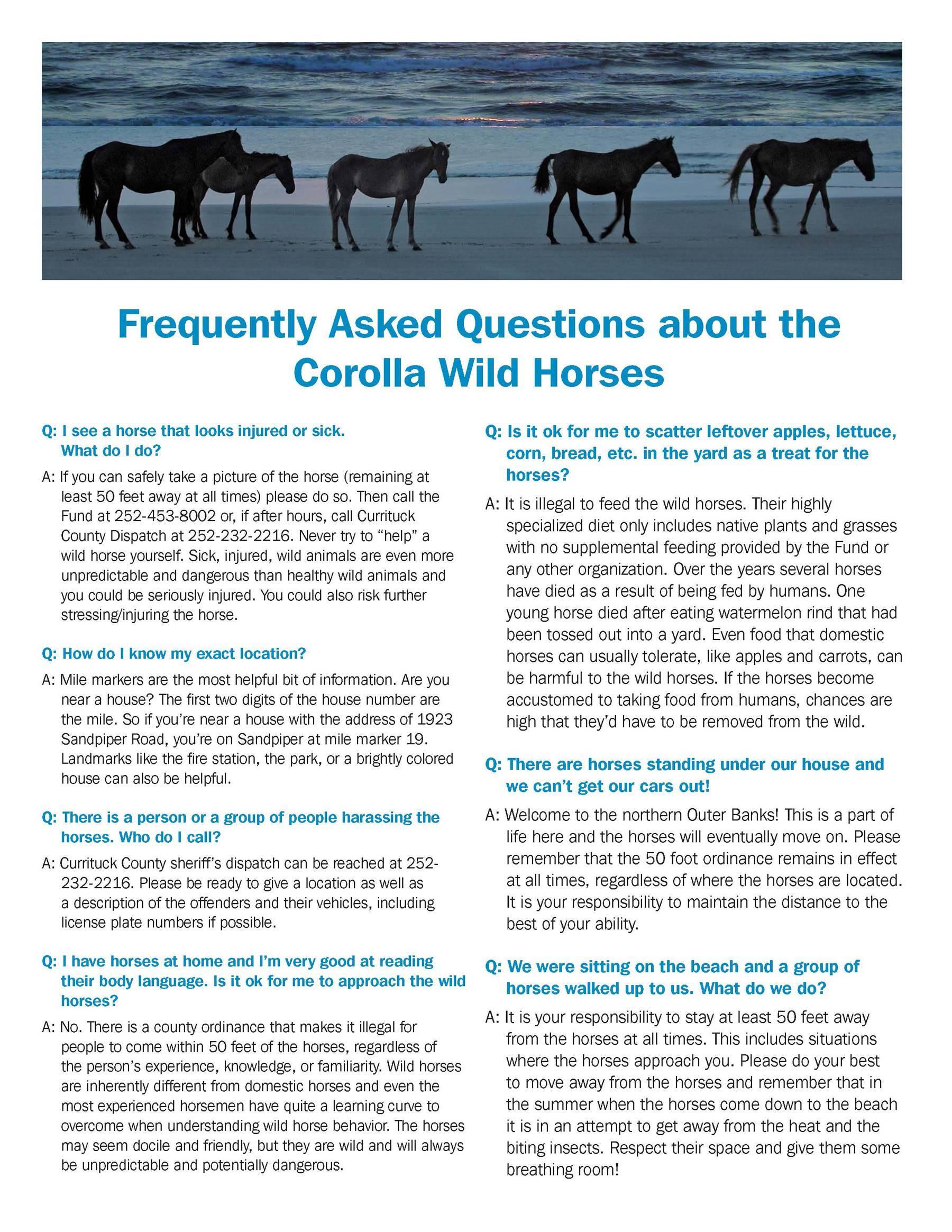 Corolla Wild Horese FAQ