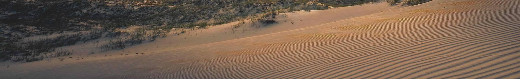 Rippled Sand Dune